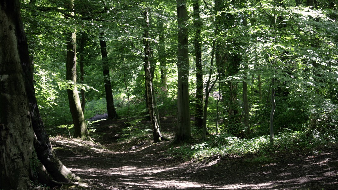 A Walk Through the Forest in Gnoll Park